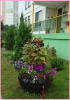 Ясли-сад № 545