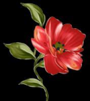 """Детский сад № 27 """"Аленький цветочек"""""""
